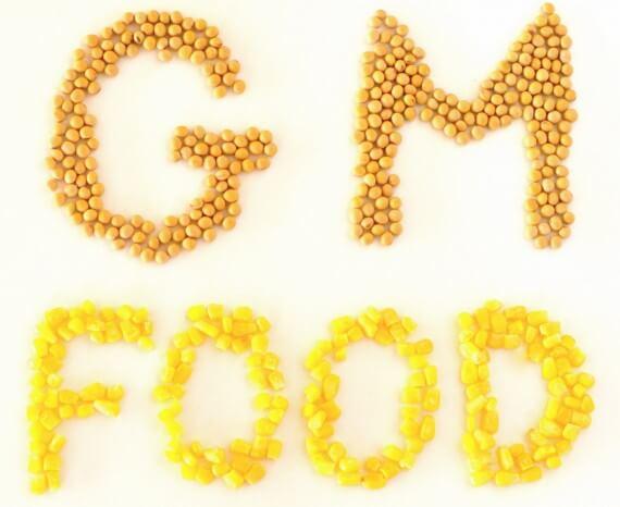 GM Food words