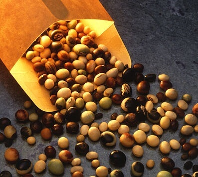 px Soybeanvarieties