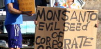 px Occupy Wall Street Maui at Monsanto