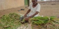 px Farmer in India