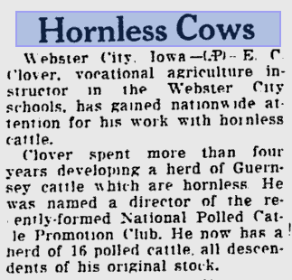 hornless cows