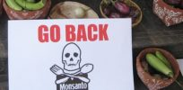 px BT Brinjal Protest Bangalore India Go Home Monsanto