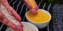 px Golden Rice x