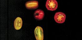 ronald tomato web