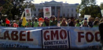Washington State GMO labeling initiative to go to the voters in a November ballot strict xxl