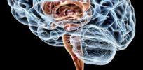 brain study bioethics x