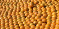 oranges usda
