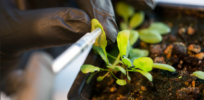 mit bionic plants