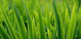 grass x