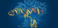 CRISPR coplex