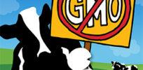gmo statement blog
