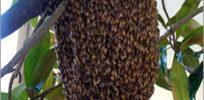 Honey Bee Hive Control