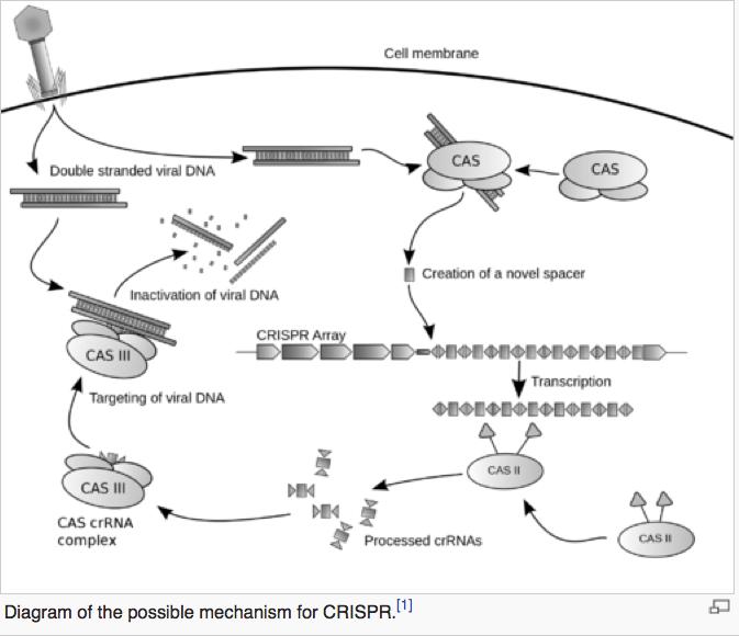Diagram of CRISPR a technique for gene silencing. (Image: Wikipedia)