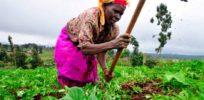 African farmer x