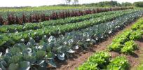 organic farm go organic