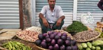 Bt brinjals on the market