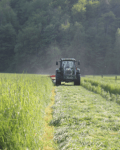 Our grass, cut and harvested as silage for winter feeding, is grown without the use of chemical fertilizers. We use animal manures and compost to fertilize our grass and corn crops.