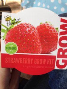 Buzzy strawberry kit