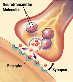 Neuron_synapse2_0