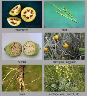 Premodified Foods