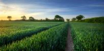 cornfield industrial agriculture jpg crop display