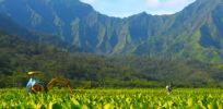 Monsanto Dow vs Maui GMO ban