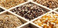 Seed Diversity