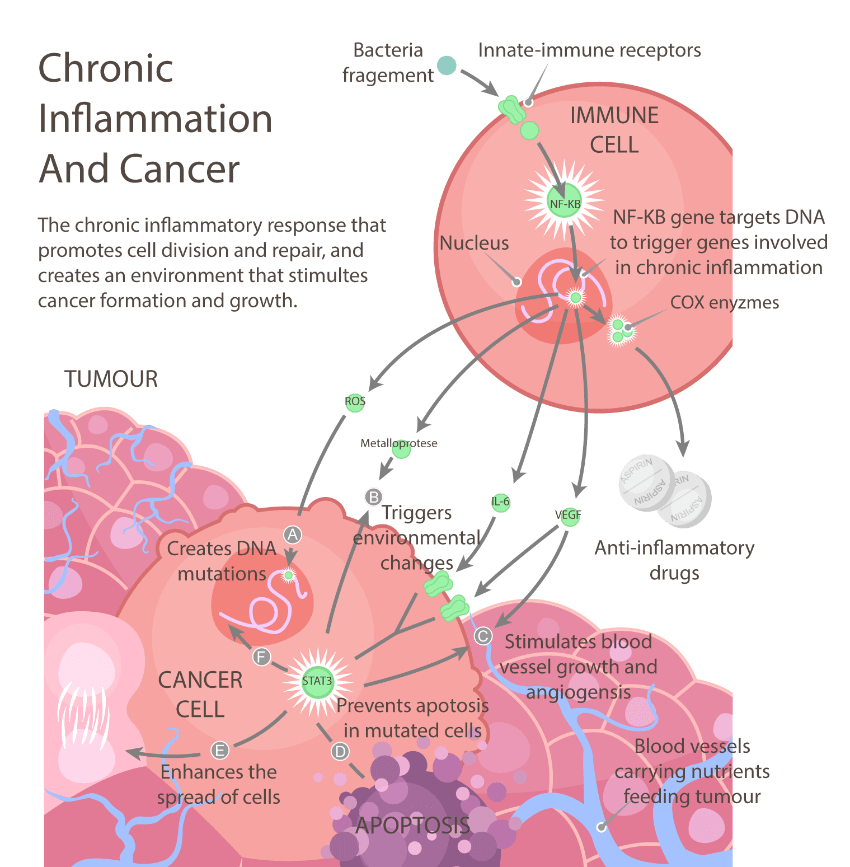 chronic-inflammation-and-cancer2