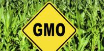 CRO health GMO