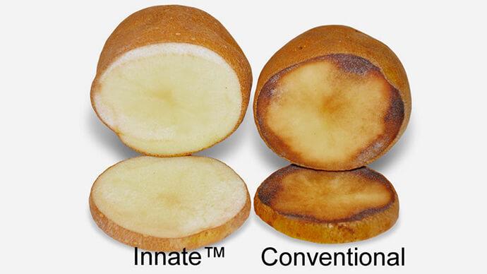 simplot-innate-potato