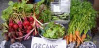 green basics organic produce stand