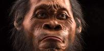 image e Homo naledi