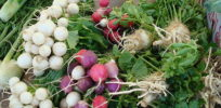 px Organic Veggies
