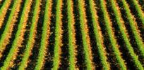 Homestead crop row