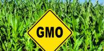 about GMOs food farm field