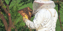px Beekeeper keeping bees e