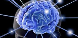 Cross talk between human gut bacteria brain