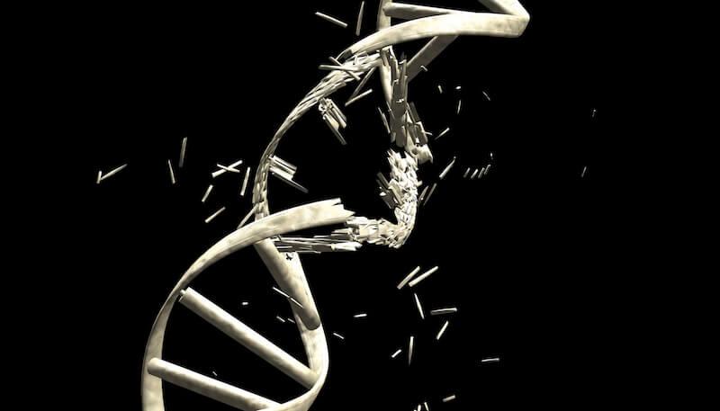 DNA breakage Constantin Ciprian shutterstock resized