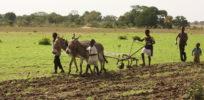 boys plowing