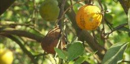 nn mpo orange nbcnews ux