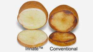 simplot-innate-potato-mcdonalds.si-
