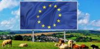 EU flag billboard field cows farm