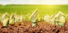 money growing from the ground Newsletter