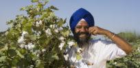 pic bt cotton punjab farmer