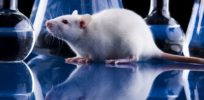 Drug industry could improve research if scientists use CRISPR edited human-like lab rats