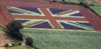 UK votes support for first GMO crop since 1998, breaking with EU