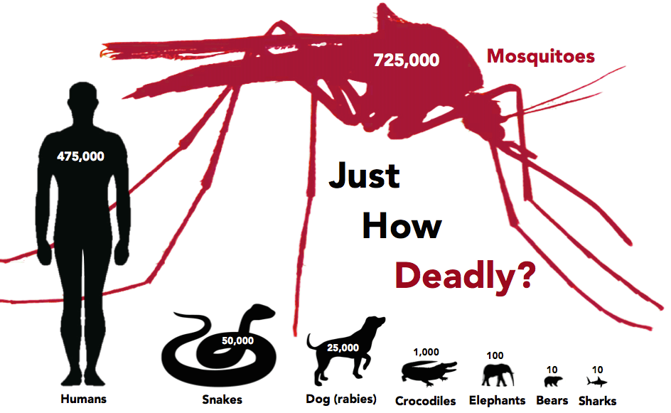 facts-about-mosquitoes-number-of-deaths