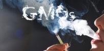 gmo smoke