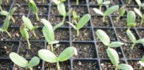 slider sprout