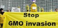 greenpeace stop gmo invasio e